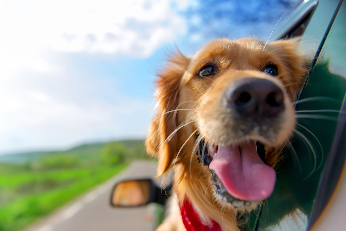 Bring Fido along for the ride when you stay at Saskatoon pet friendly hotels.